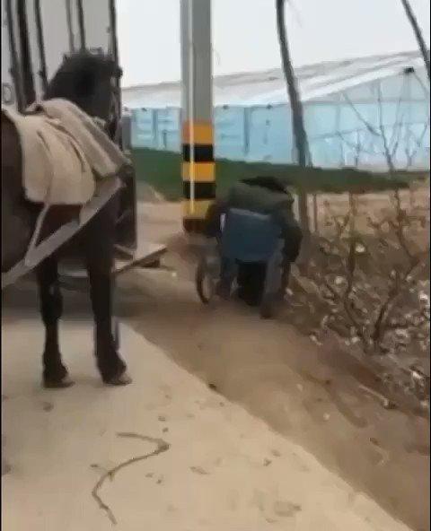 اللهم سخرنا لعبادتك وطاعتك يارب كما سخرت هذا الحصان لهذا الانسان✋⚘