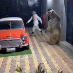 アラブ石油王風の男性とクマが命がけの追いかけっこをして遊んでいる動画が発見される