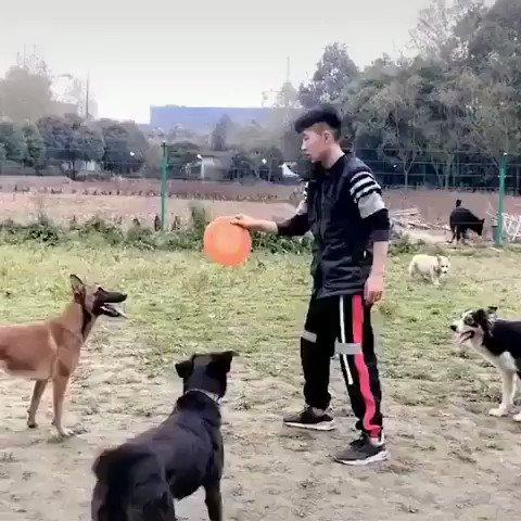 Everybody was dog-fu fighting. (https/imgur.com/gallery/JDTLkpc)