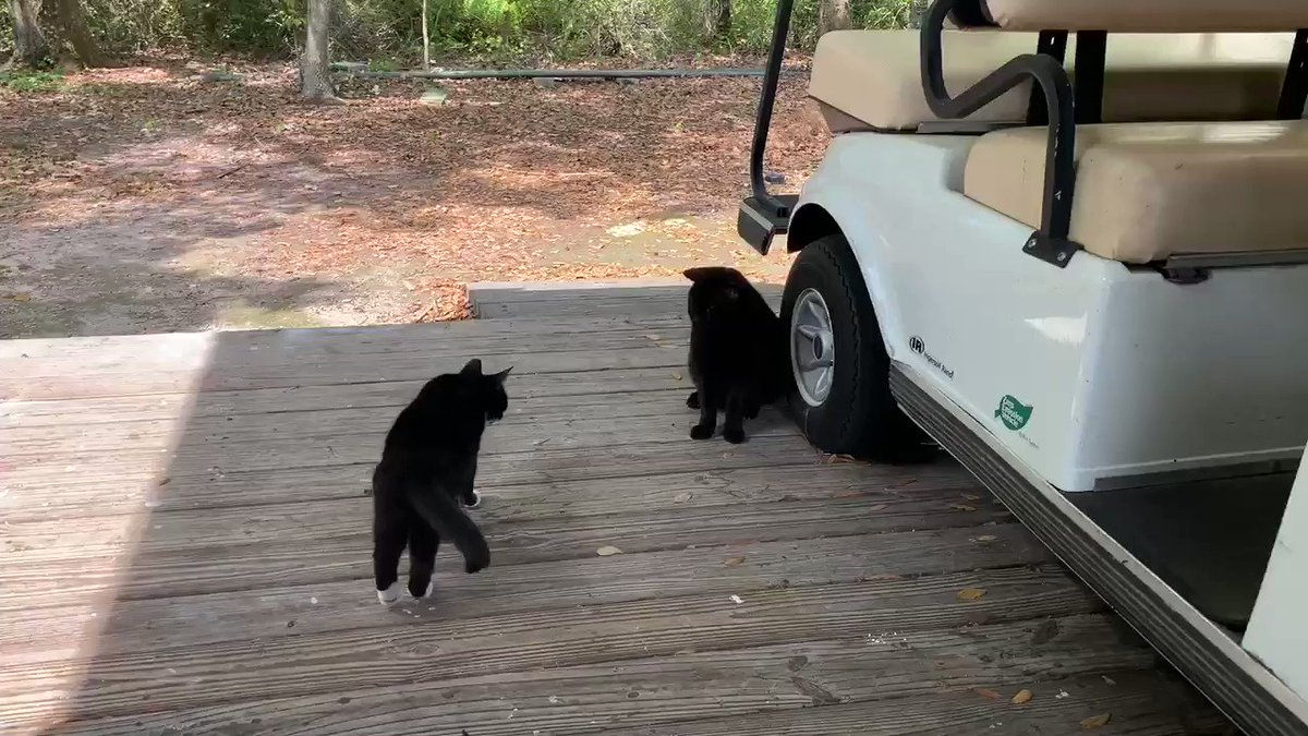 Shadow the #TuxedoCat Max the #MightyPanfur & Bubba the #GreyPanfur are relaxing on the maintenance deck at the Big Guys Main Work Campus.  They send lots of #TunaTuesday Purrs of #Peace #Love & #Calmness to all of their Furrends.  #CommunityCats pic.twitter.com/bDTXMSWaaK