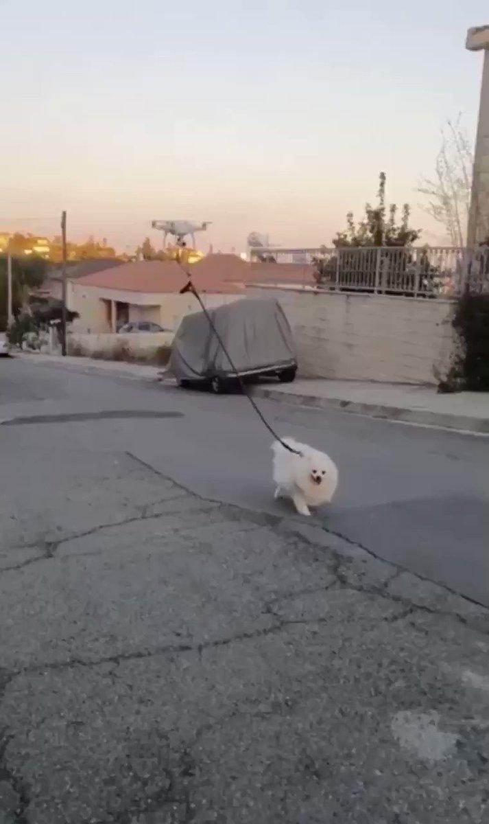 An Israeli man walks his dog via drone (source: Facebook)