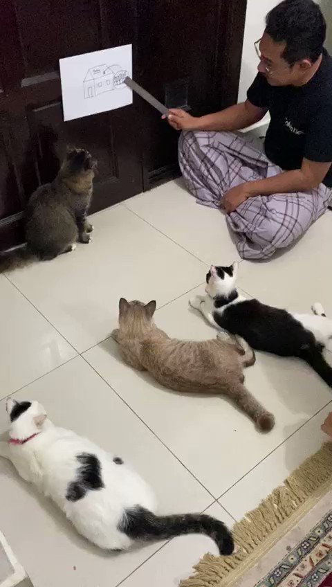 Replying to @sofiarudyy: day 6 of quarantine: my dad gave a talk to the cats about covid-19 😭😭😭😭😭😭😭😭