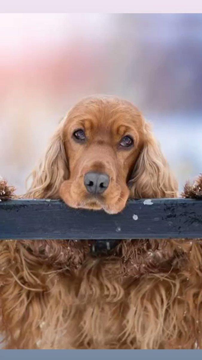 元気が一番  飲み水に1滴入れるのと  餌にも入れたりとか  毎日お尻洗ったりとか  足洗ったりとかするんで  そのついでに  首とか顔に  塗ってます   詳細  ↓ http://bio-s.jp/lp/  #犬好きな人と繋がりたい  #犬 #猫 #いぬ #ねこ #猫好きさんと繫がりたい #老犬 #ペット介護 pic.twitter.com/G57pDuPBgg