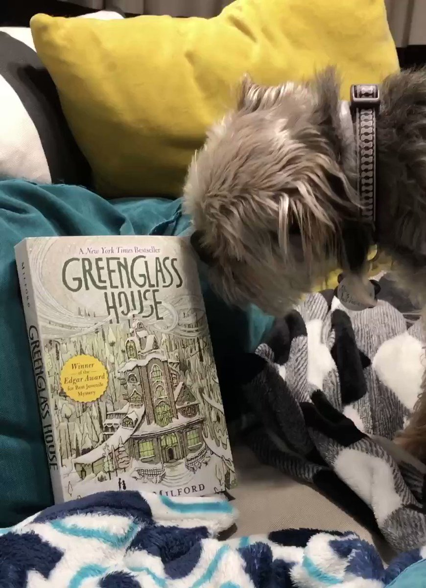 A new week means a new favorite read from my dog, Albie!  This week's favorite read is- Greenglass House by, Kate Milford.  Albie loves a good mystery with a jaw-dropping plot twist!  <a target='_blank' href='http://twitter.com/KateMilford'>@KateMilford</a> <a target='_blank' href='https://t.co/F0mz1jkkkp'>https://t.co/F0mz1jkkkp</a>