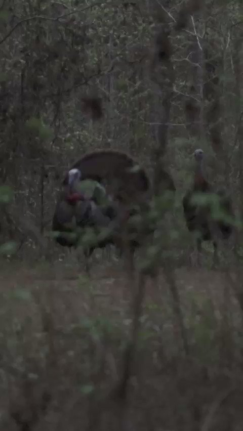 Watch the full hunt of the Jordan double in Alabama via @Realtree youtu.be/UD6EobKfwvg