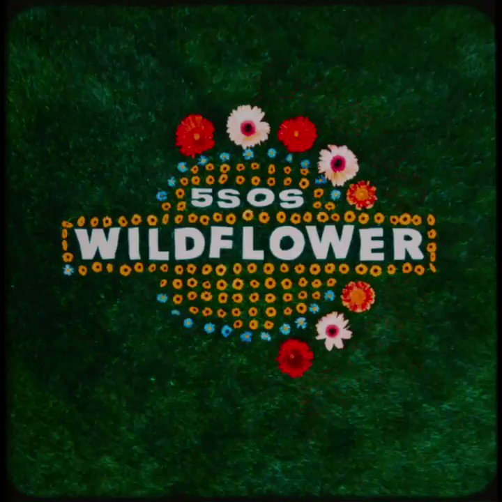 의 미디어: RT @5SOS: Wildflower out now // https://t.co/4RoirePzlt https://t.co/agw4emJpXx