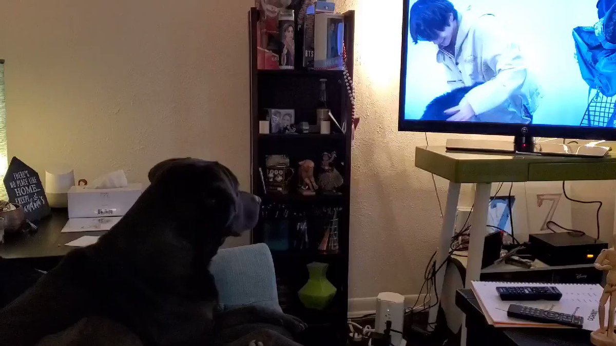 Marcel rarely watches TV, but if theres a dog on the screen, even if its a silent dog, suddenly hes *focused*.