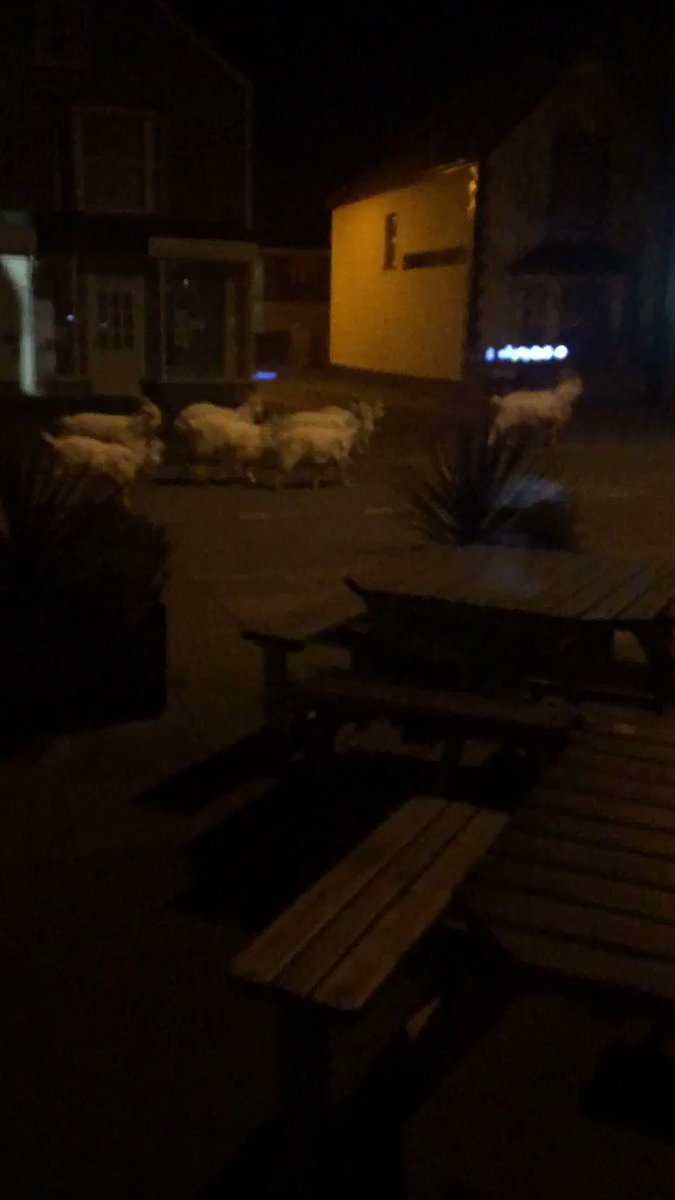 I think I just got a group of goats in Llandudno arrested. Let me explain... first, I saw this from inside a dark pub (the one I live in currently). I thought I was seeing things. So I took some video: