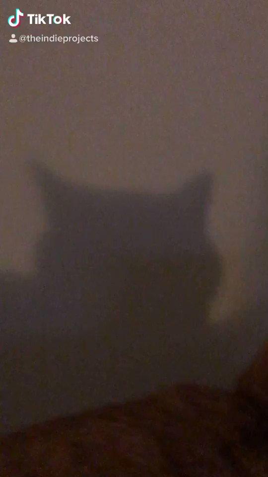 Sound on #BatCat #CatsOfTwitterpic.twitter.com/WH2wn57QKM
