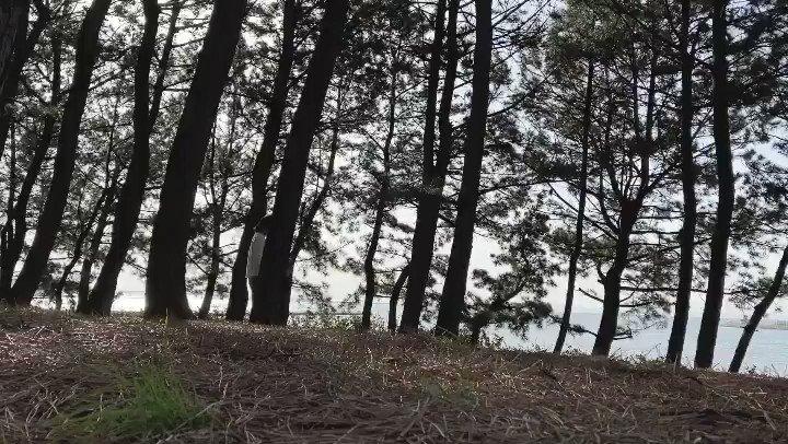 Improv 3/21  #improvisation #improv #improdance #dance #contemporarydance #nature #インプロ #公園 #自然 #高木正勝 #ダンス #即興pic.twitter.com/31ga3AOVr9