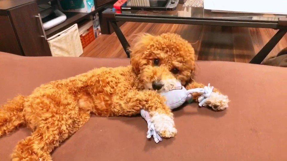 暗いニュースも多いし玩具で遊ぶウチの犬の動画でも見て癒されてくれ