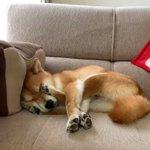 どうなつてるの?この犬は…。知恵の輪みたいに絡み合う手足が!