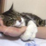 【不要不急な外出防止にぴったり】飼い主の腕を離さないモフ猫が可愛すぎる
