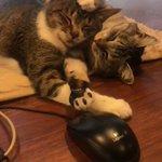 のんびり過ごすプロたち!癒される猫の動画はこちらw現代人やいつも忙しい人は見てみて!