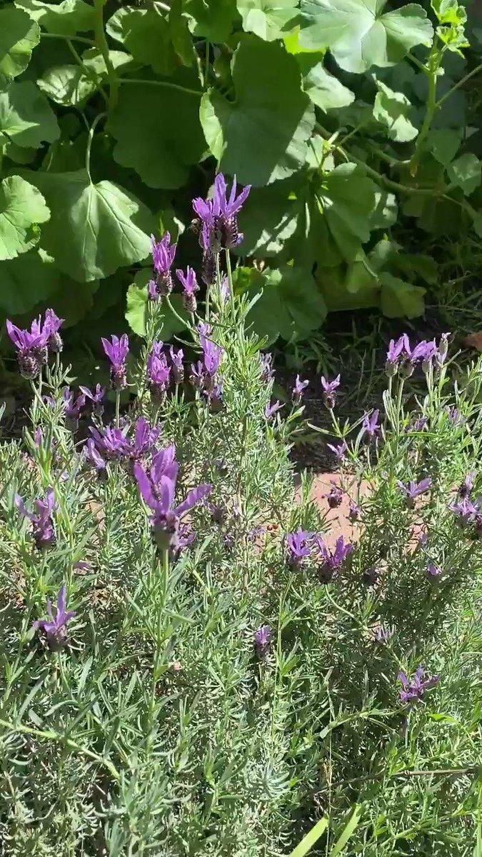@mammalLady My busy bees ❤️