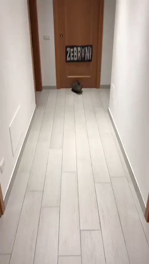 I've never shared a cat video before, but football kitty deserves our awe and respect. #cute pic.twitter.com/VQHgQfCyaD