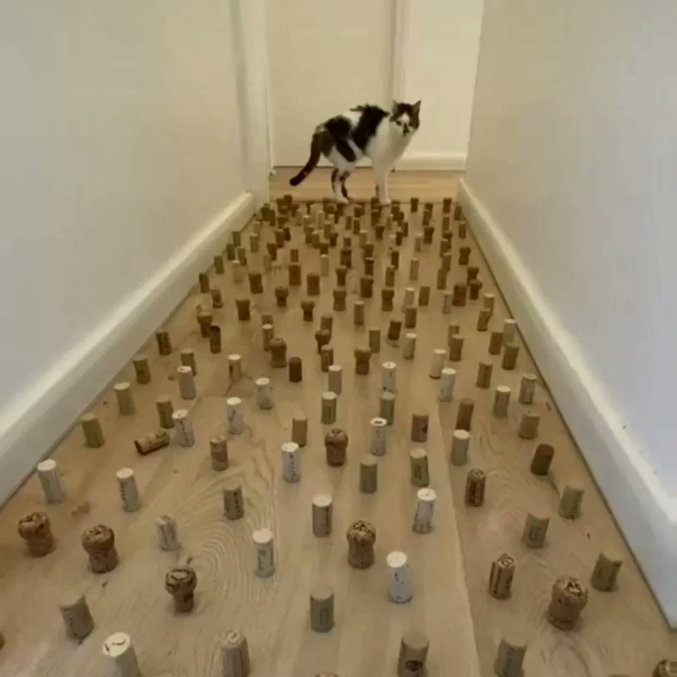 No way that cat will get through this!