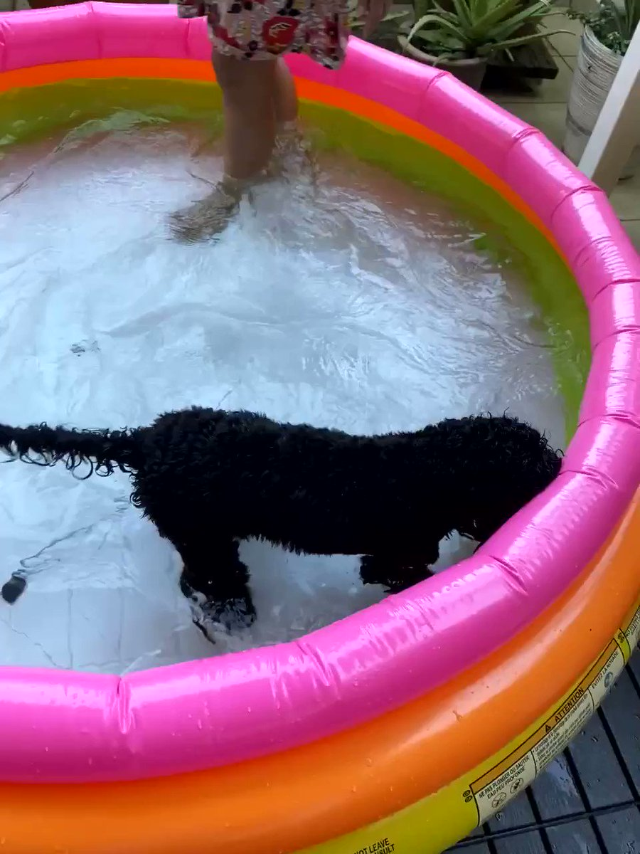 How are you keeping yourself entertained? I love snorkeling for leaves in my pool! Who else enjoys water this much!?  #BeHappy #havefun #DogLife #DogsofTwitter #keepsmiling #cute pic.twitter.com/Aj71rw3vn0