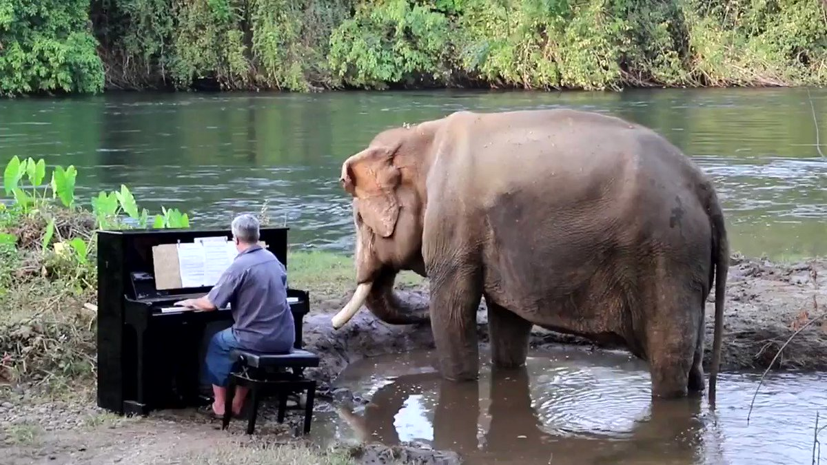 The purest thing you'll see today - classical pianist Paul Barton playing the piano for rescue elephant Mongkol in Thailand:https://youtu.be/q1lIEmneQQc