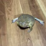 カエルのかわいい声に注目・水の中でのブクブク・・・・・!
