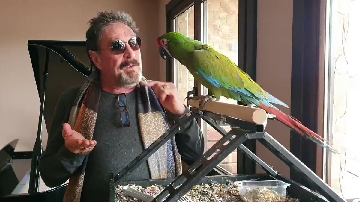 I attempt to teach Pirate Parrot a Frank Sinatra song. Discovered Parrot hates Sinatra.