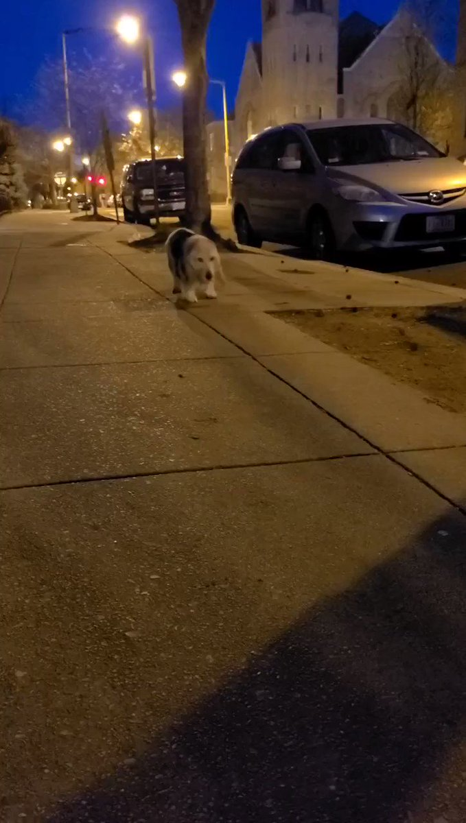 Our own @JenksNBCS called play-by-play of his morning walk with his 15-year-old basset hound, Josie.   You take 'Sitting on the Sidewalk' at +150 any day of the week  @dog_ratespic.twitter.com/HfGHHfMT0V