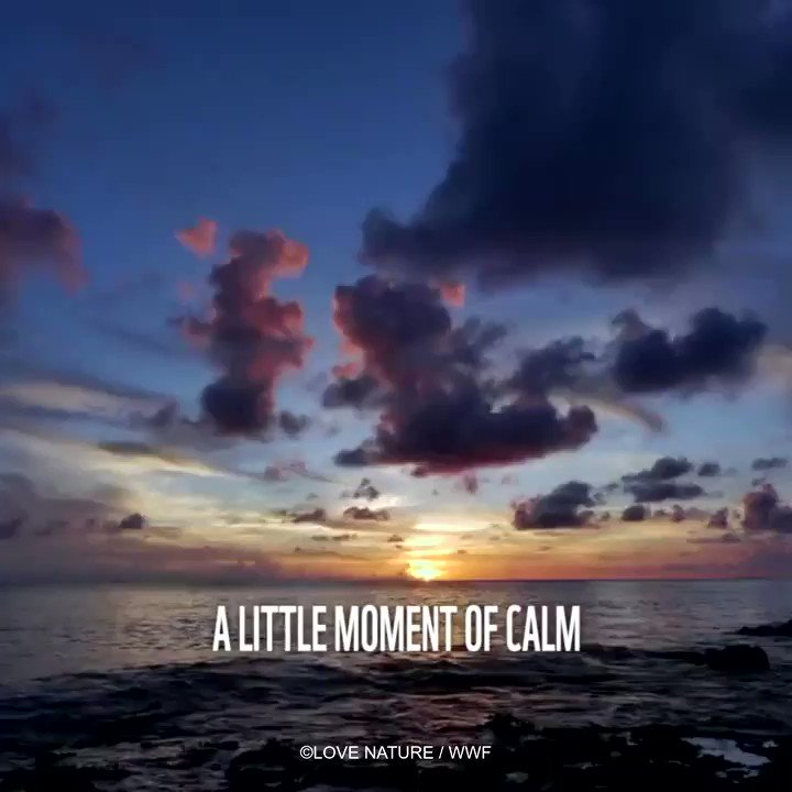 Struggling to remember the sounds of #nature at this difficult time?🌊 Turn the volume up for a little reminder 🔉 RT to bring a small moment of calm to someone's twitter feed.