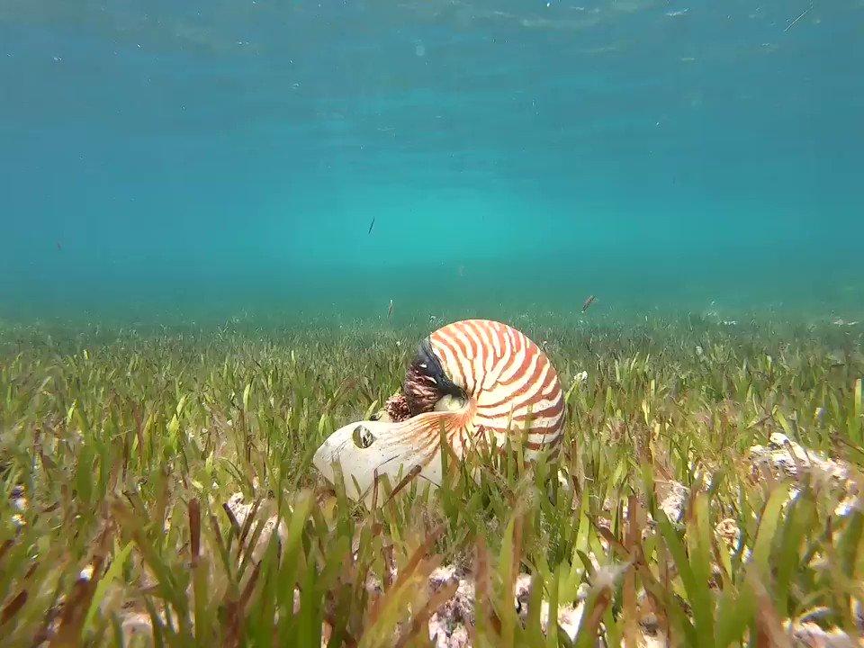 Always a surprise! #ocean #maldivespic.twitter.com/sQhnFV2Hik