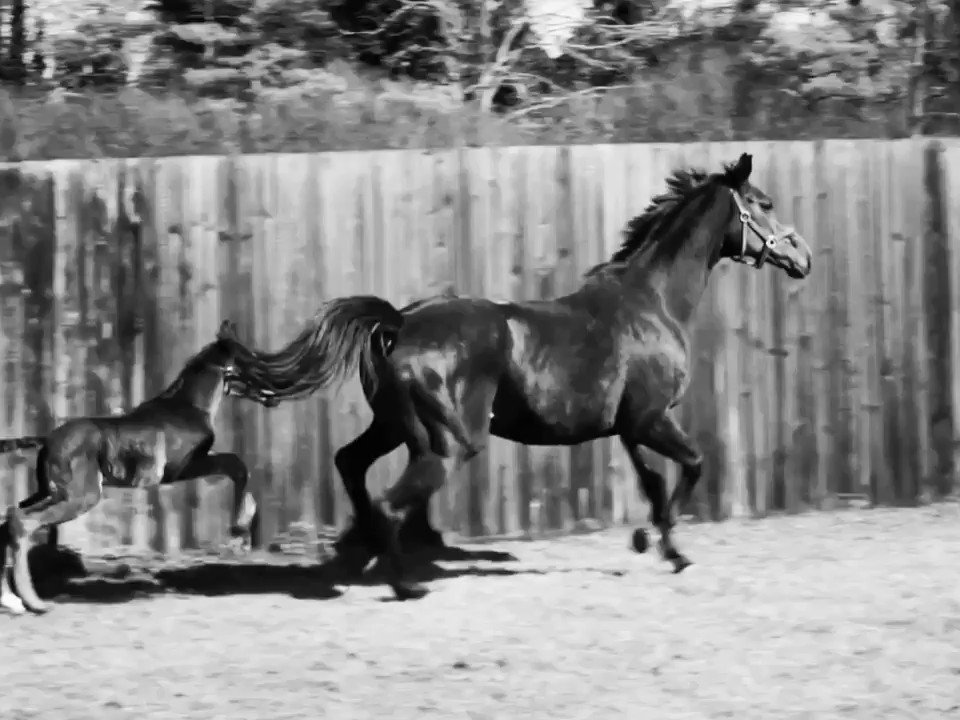 Foaling around! Love foals learning to use their legs. They run as fast as a Ferrari even when they are only a day or so old. Filmed at the National Stud. #foal #foalsofinstagram #horsesintraining #thoroughbred #horses #racehorse #nationalstud #horsingaround #equinephotography pic.twitter.com/luur1RNU3u