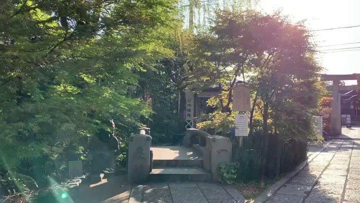 境内のしだれ桜が、今年もきれいな花をつけて風に揺れています。皆様に少しでもお花見気分を味わっていただけますよう。 また来年、一条戻り橋のたもとに佇む式神の石像とともにお待ちしております。#花見