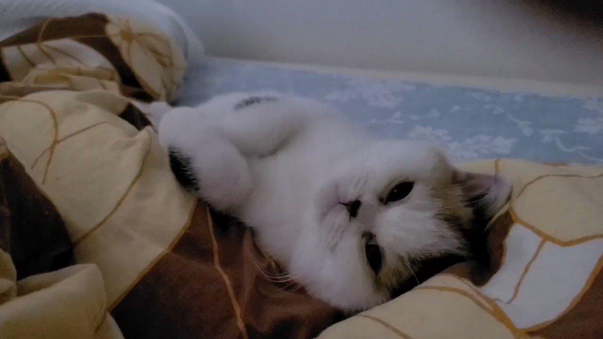 起きたら隣で寝てた