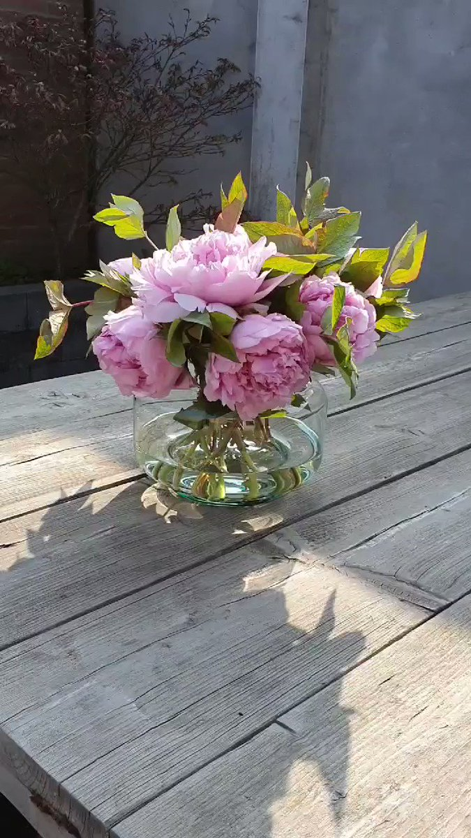 Ooo... Look what I just found!!! Peonies... All are open... Had to buy them anyway.  Happy Tuesday dear @davelackie and Twitter friends  #Peony #Peoniespic.twitter.com/DwFApB4EqF