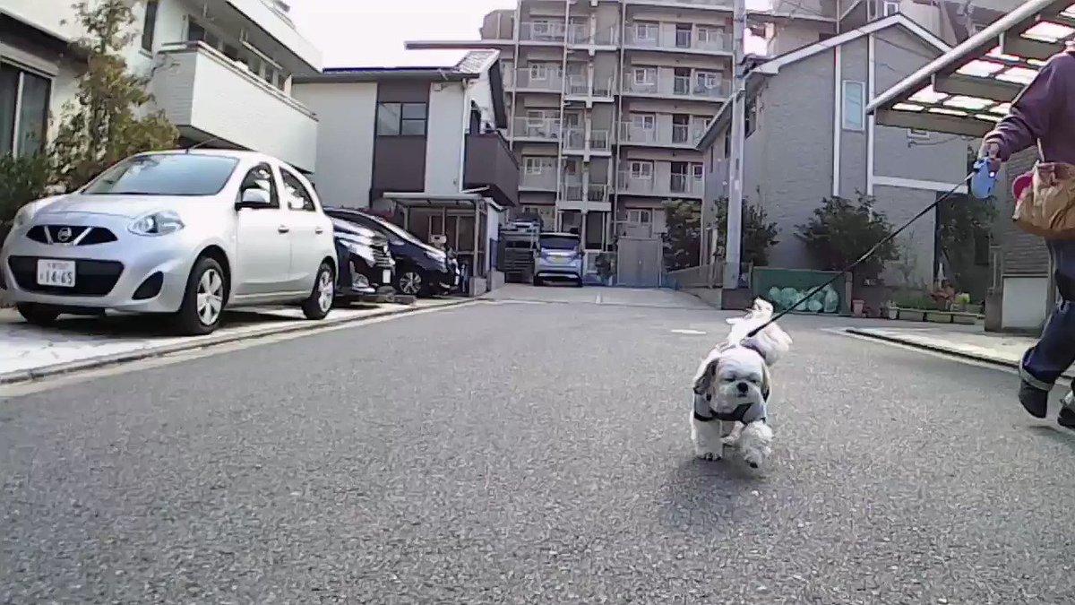 おはようございます 今朝も7時にカールの散歩に行って来ました 新型コロナに負けずカールは元気に歩きました 今日もヨロシクお願いします #シーズー #shihtzu #ワンコ #愛犬 #犬好きな人と繋がりたい #犬好きさんと繋がりたいpic.twitter.com/b5IoGUtoTW