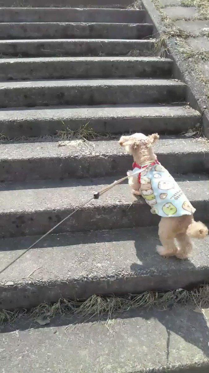 今年お初の散歩だじょ  いつもの河川敷への入口で 暫しのクンクン♪クン活  軽めの散歩のつもりが  グングン!グイグイ! 結果 1時間のコース  飼い主 息切れ&脚 腰 背中痛~  #今年初の散歩 #シニア犬 #愛犬pic.twitter.com/jLY1o3aoSz