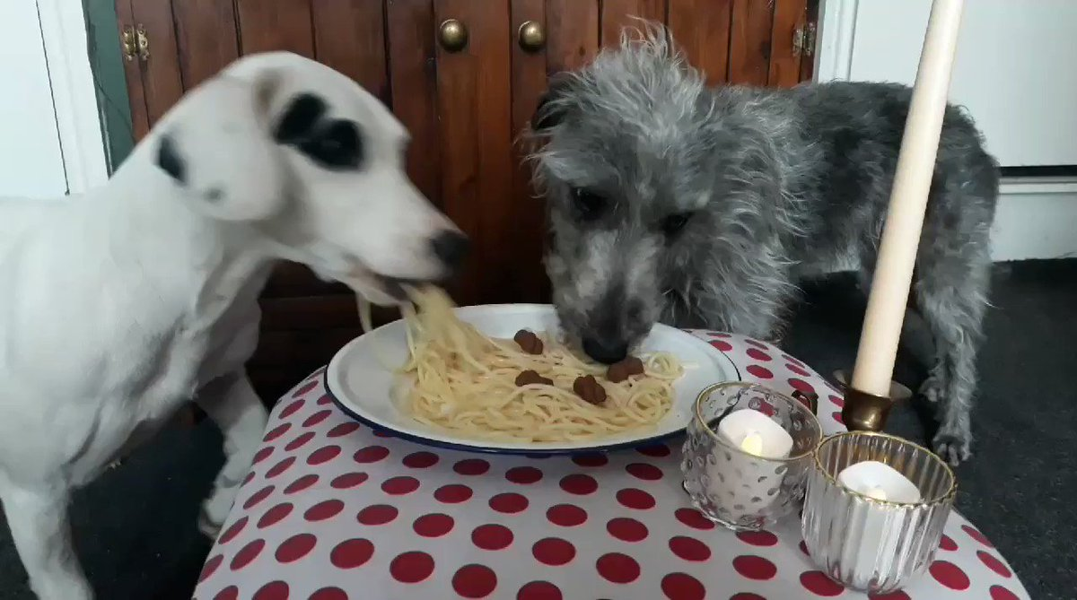 One take wonder for #hometasking number 7. Dogs have been to Tony's for breakfast. pic.twitter.com/4phQQZSR2y