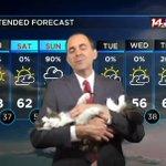 テレビもテレワークにより自宅のネコ登場で視聴率アップ?!当たり前のように猫を抱く気象予報士が癒し!