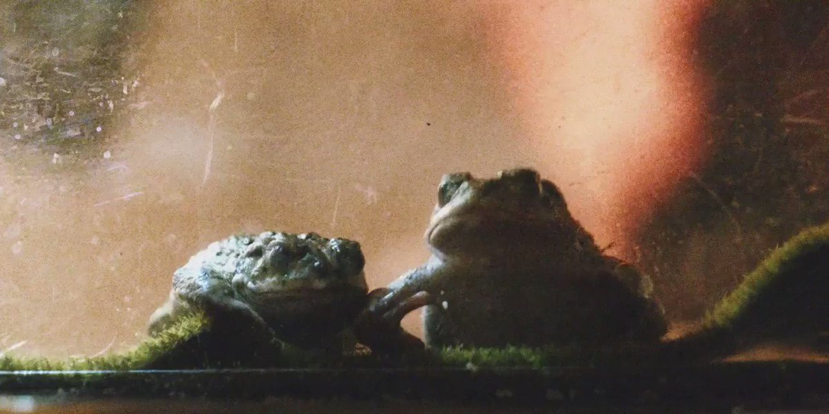 Go behind the scenes of the Boyfriend video with me and the real star… Fiona!! 🐸 https://t.co/qe35dmnExu https://t.co/8lXq8bmAXA