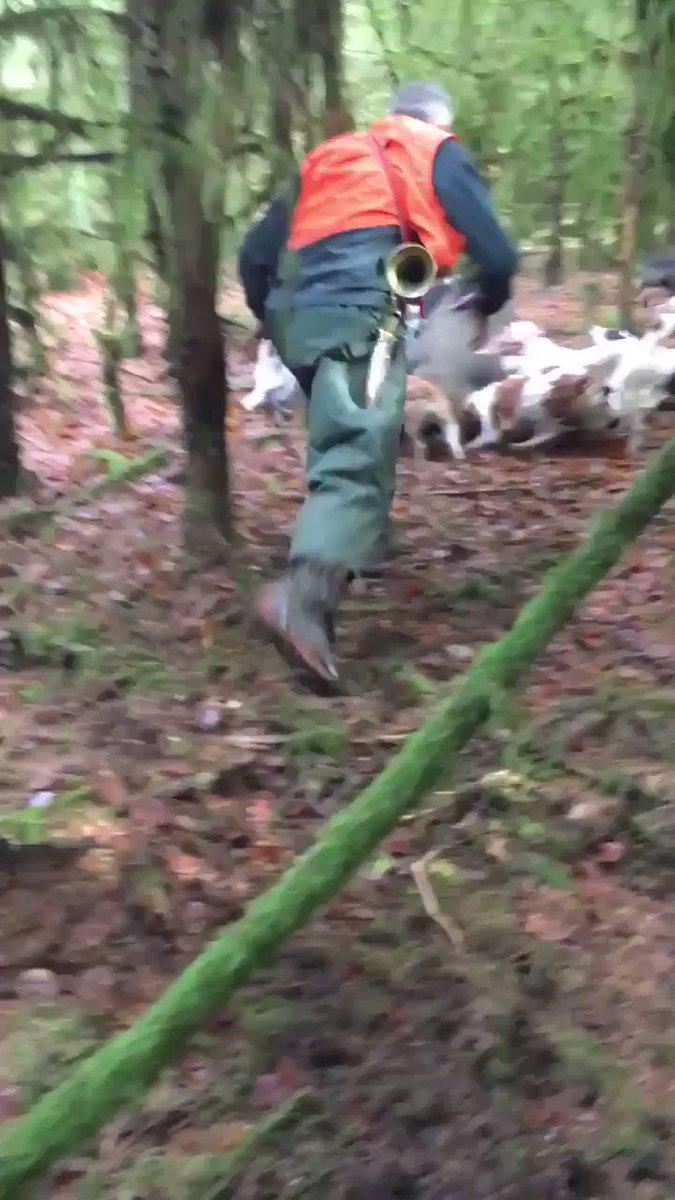 Des images insoutenables de chasses au ferme, où un #sanglier est tué de la pire des manières.  Le journaliste Hugo Clément précise que la vidéo a vraisemblablement été tournée en Belgique.  #TiredEarth #biodiversité #chasse #AnimauxSauvage pic.twitter.com/B1QPAcy0CZ
