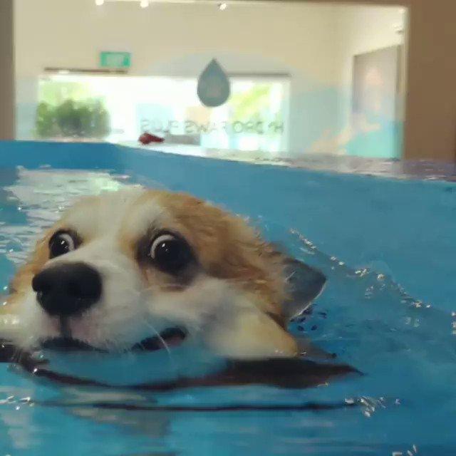 泳いでる時の目力強すぎる🤣