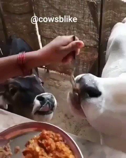 This Pav Bhaji eating video😍🍲