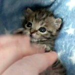 ヨイヨイっと踊っている子猫が可愛すぎて溶けそう