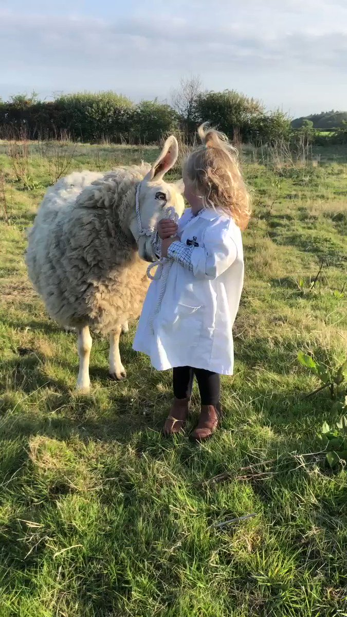 Spent the last hour judging the online sheep show   And I have to tell you that the young handlers under 8 class was the cutest thing I have ever seen