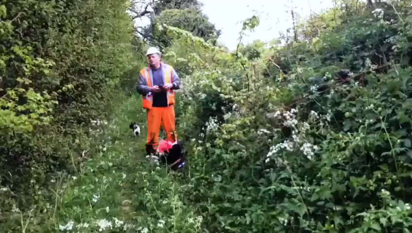 HS2 ecologist admits to wildlife in a hedge prior to it being cut. #STOPHS2 @ChrisGPackham @NaturalEngland @BBCNews @itvnews @Channel4News @guardian #NHSnotHS2 #HS2rebellion #ExtinctionRebellion