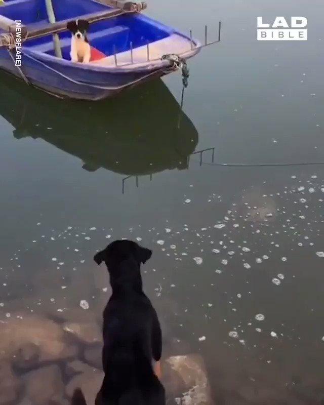 We don't deserve them. Dogs, bruh...💪🐶😍😇❤️😉