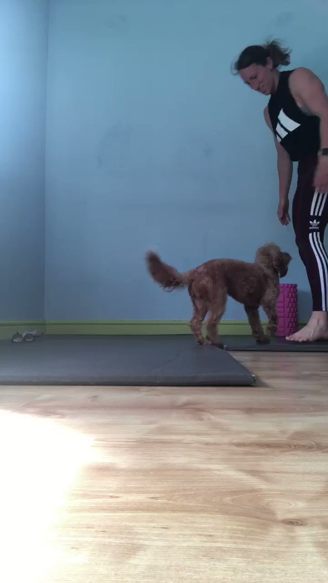 Yoga with the pooch #yoga #doggyyoga #dogs #training #headstand #strength #core