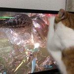 「こいつめこいつめ」テレビゲームのモンスターを倒すのを手伝う猫が即戦力