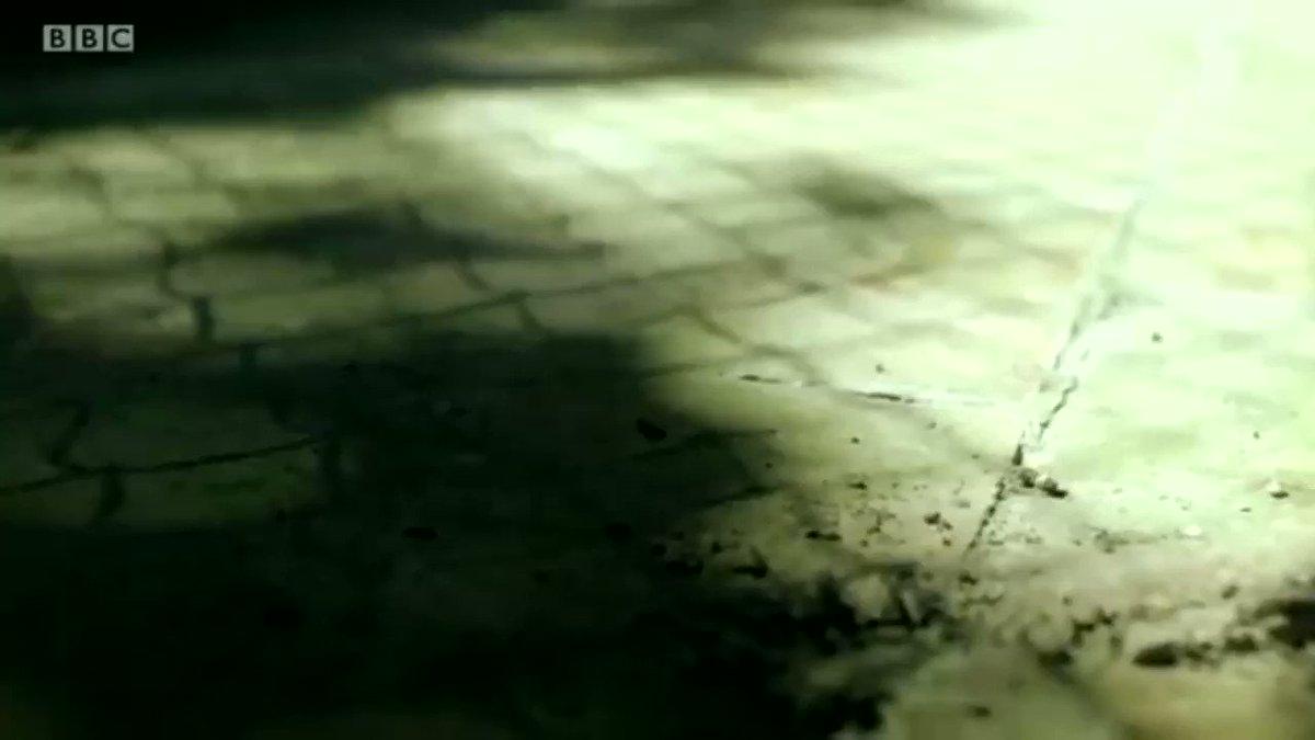 بقدرة قادر كانت النتيجة سرعة الضوء .. — هذا ما وجده ماكسويل وهو يتلاعب برياضيات معادلاته الأربع التي ربط فيها الكهرباء والمغناطيسية جيم الخليلي يشرح باختصار شكل المعادلات وكيف استنتج منها ماكسويل سرعة الضوء .. — رموز غريبة لغير المتخصص وروعة العلوم أن تكتشف اسرار الطبيعة منها ..