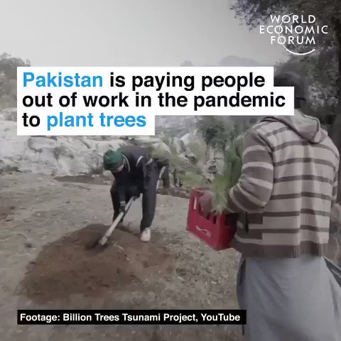Pakistan is employing people out of work in the pandemic to plant trees. Triple win - good for #climate, good for #nature, good for people! We have the solutions. Protect people and the planet. #GreenNewDeal #JustRecovery #ActOnClimate #Covid19