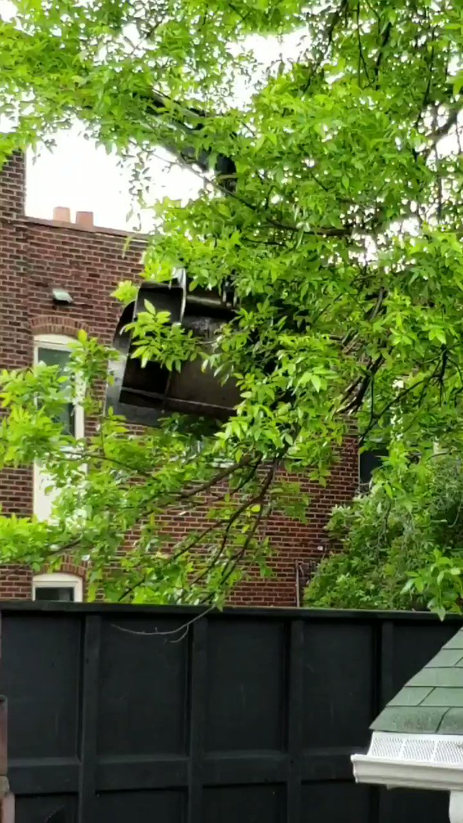 Normal tree trimming: use clippers or saw. Tree trimming in St. Louis: