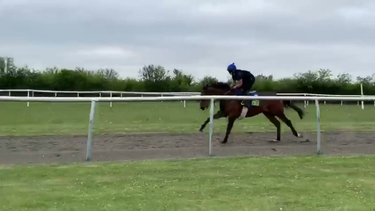 At just 16 years old Taylor has serious skills!  Not just controlling 500kg of racehorse, but balancing when he's exuberant!  That's what 9 weeks of training on our Foundation course leads to  Find out more https://brs.org.uk/course-categories/diploma-courses/…  #MySkills @NCWSkillsDays @careersinracingpic.twitter.com/eCmU7z4cTm